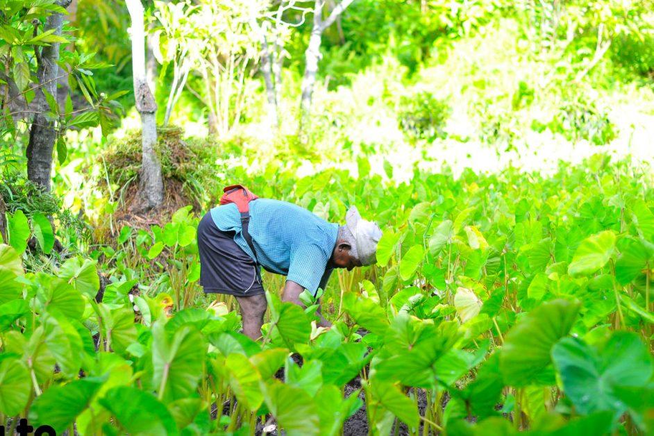 Agricultural Investment Platforms